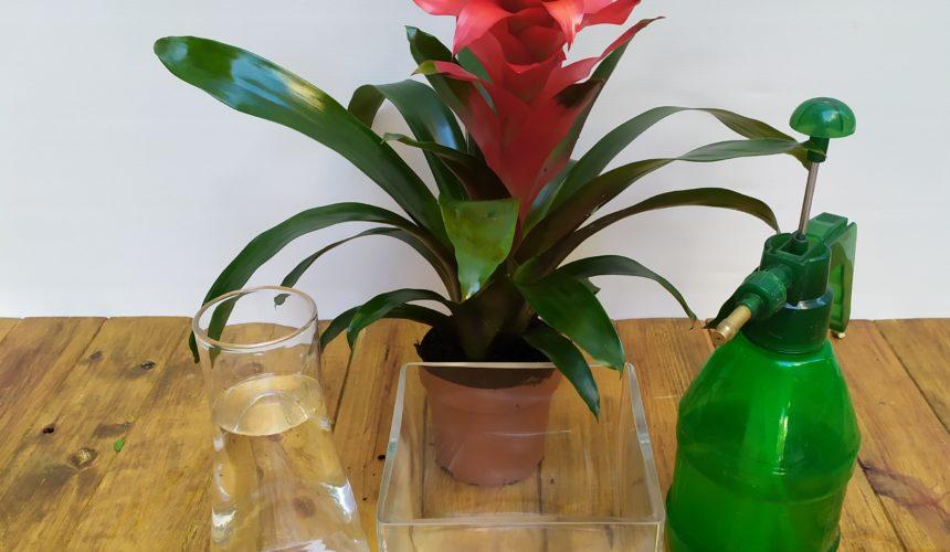 Cómo mantener nuestras plantas durante las vacaciones
