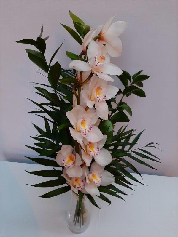 Rama de orquídeas